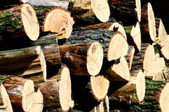 Pile of oak wood with a butterfly Stock Photo