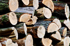 Pile of oak wood Stock Image