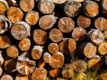 Pile od cut wood Royalty Free Stock Images