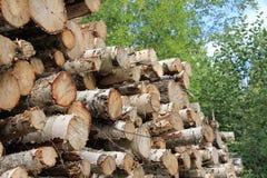 Free Pile Of Birch Logs Stock Photo - 20847040
