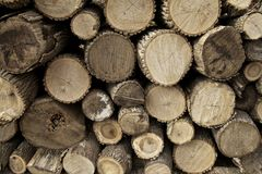 Pile Of Fire Wood Royalty Free Stock Photo
