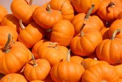 Free Pile Of Pumpkins Royalty Free Stock Image - 11171266