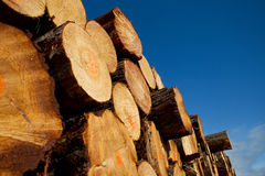 Free Pile Of Timber Logs From Logging Royalty Free Stock Photography - 20444197