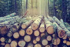 Free Pile Of Wood Royalty Free Stock Images - 91367839