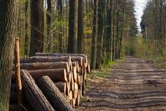Free Pile Of Wood Logs Stock Image - 91639841