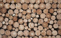 Pile Of Wood Logs Stumps For Winter Stock Photo