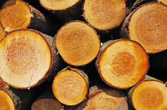Pile Of Wooden Logs Stock Photo