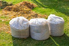 Free Pile Of Yellow And Orange Fallen Leaves Collected In Big White Plastic Bags On Green Grass Lawn At Backyard. Autumn Or Spring Stock Photo - 155335200