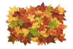 Pile og vibrant fall leaves Stock Photography