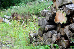 Pile of old logs in an overgrown field. Pile of old logs in an field with weeds growing all around Royalty Free Stock Photography