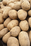Pile of old potatoes. For sale to the market royalty free stock photos