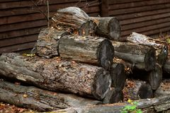 A pile of old tree trunks sawn. Royalty Free Stock Image