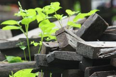 Pile of old wood decay. Royalty Free Stock Images