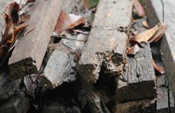 Pile of old wood decay. Royalty Free Stock Image