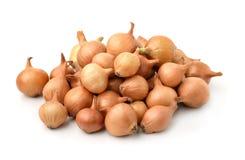 Pile of onion sets. Isolated on white Stock Image