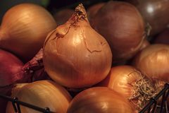 Pile of onions royalty free stock photo
