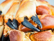Pile of orange boiled with black tip, crab claws. At closeup Stock Photos