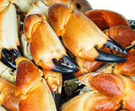 Pile of orange boiled with black tip, crab claws. At closeup Stock Photo