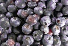 Many Blueberries Stock Photo