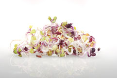 Pile of organic radish sprouts on white background. Stock Photography
