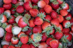 A pile of red strawberries. royalty free stock images