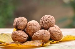 Walnut. Pile of organic walnuts. Macro detail Royalty Free Stock Images