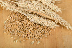 Pile of organic whole grain wheat kernels and ears Stock Photos