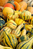 A pile of ornamental pumpkins Royalty Free Stock Image