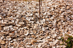 Pile of Oyster Shells Royalty Free Stock Photo