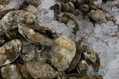 Pile of Oysters with Clams in the background Royalty Free Stock Photos