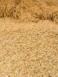 Pile of paddy Royalty Free Stock Images
