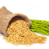 Pile of paddy Royalty Free Stock Photo