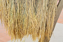 Pile of paddy in brown shell from Thailand Stock Images