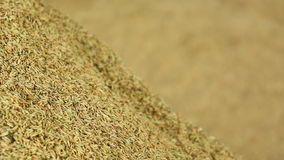 Pile of paddy grains stock footage