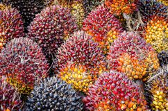 Pile of palm oil Royalty Free Stock Photo