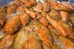 Pile of Parrot Fish in a Market Royalty Free Stock Photography