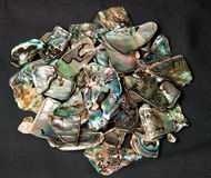 Pile of Paua shells Royalty Free Stock Image