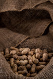 Pile of Peanuts. A pile of salty peanuts laying on a burlap sack Royalty Free Stock Image