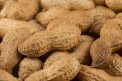 Pile of peanuts shells close up Royalty Free Stock Image