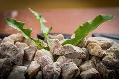 Pile of pebbles in a bowl with green leaves Royalty Free Stock Photography