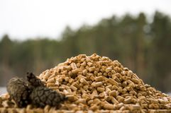 On scattered pellets lies a branch of pine stock images