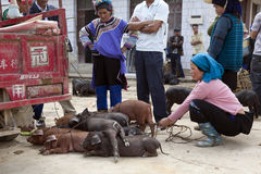 Pile of Pigs at Market. A Hani woman holds the leashes of several piglets for sale at a local market in Yuanyang, southern Yunnan province, China Stock Photo