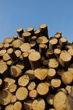 Pile of pine logs Stock Photography