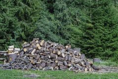 A pile of pine logs in the forest.  royalty free stock image