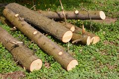 Pile of pine logs on green grass Stock Images