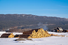 A pile of pine logs in a vacant lot. Royalty Free Stock Photo