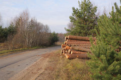 The pile of pine lumber. In a forest about road Royalty Free Stock Photo