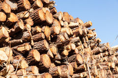 Pile of pine tree trunks cut Stock Images