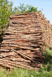 Pile of pine tree trunks Stock Photo