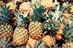 Pile of pineapple close up royalty free stock photo